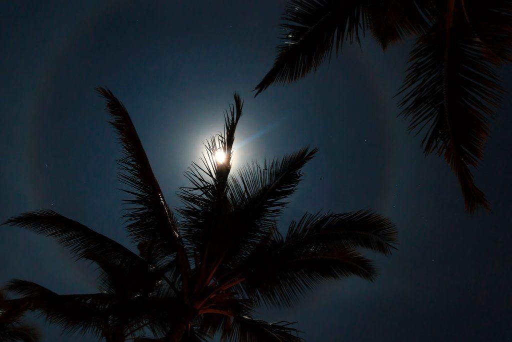 29 лунный день фото 1