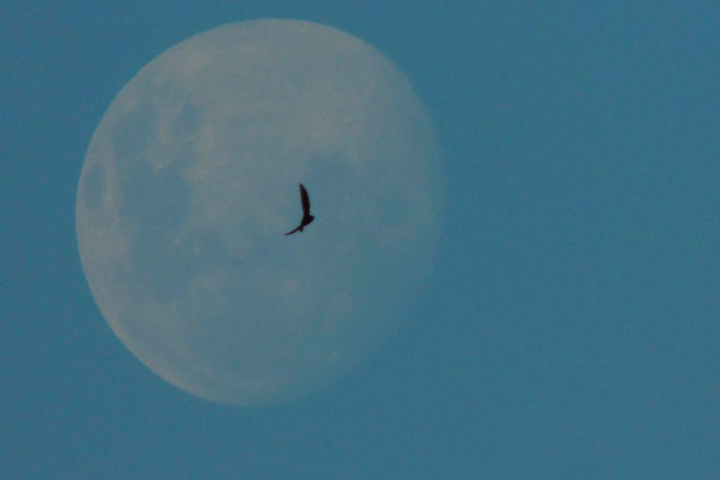 29 лунный день фото 3
