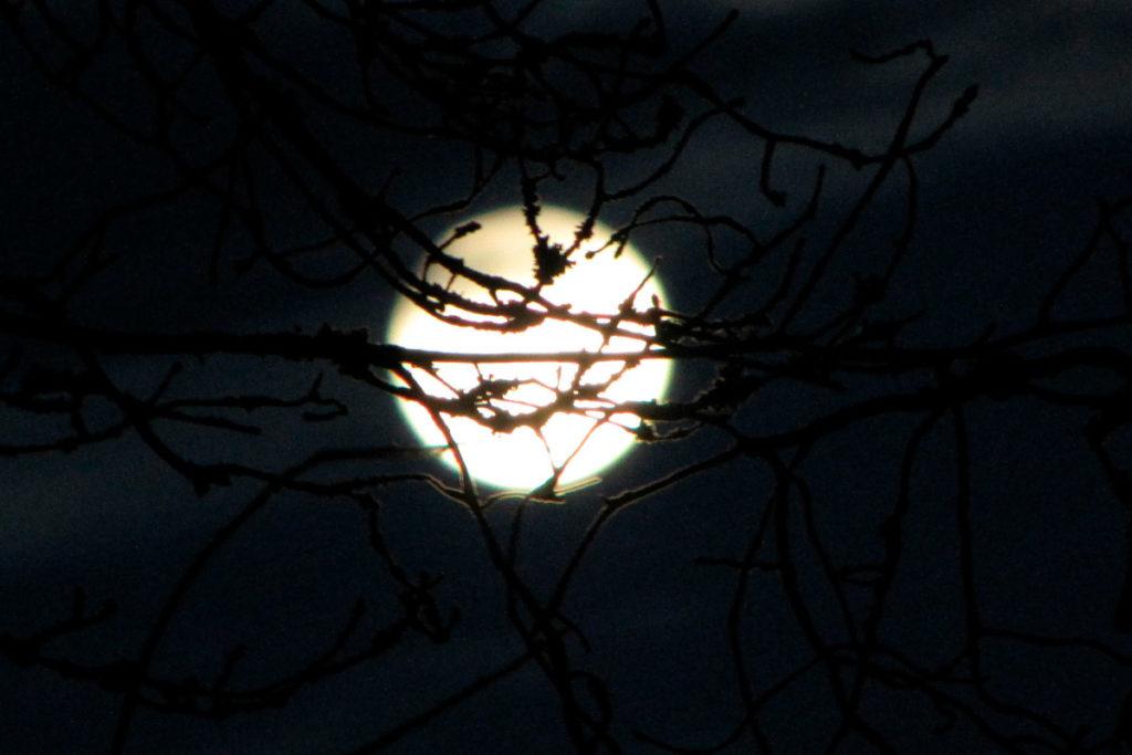 29 лунный день фото 5