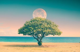 Четвертый лунный день фото 2